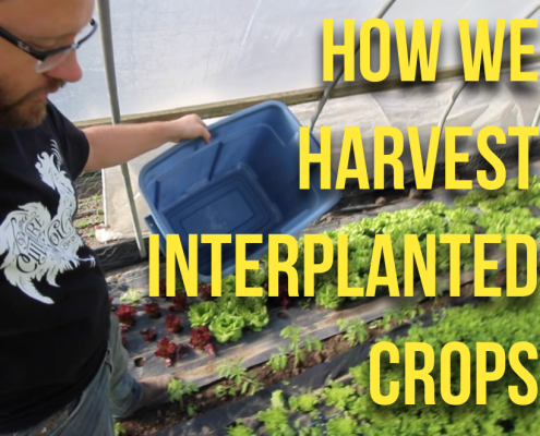 Q&A Ingterplanted crops