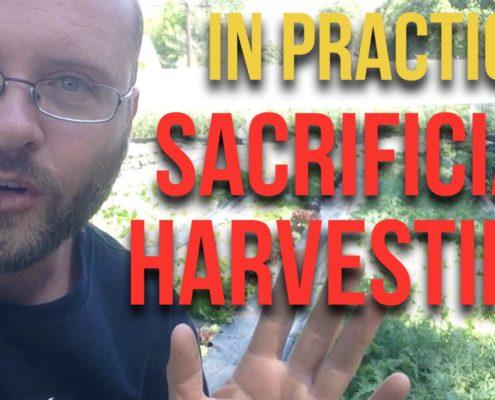 Sacrificial Harvesting